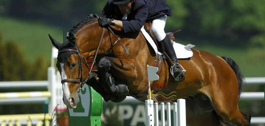 HVR Sports   equestrian 123 1 899x428 Rules of Equestrian Sports
